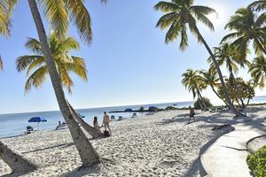 På den tre kilometer långa Smathers Beach lutar palmerna i de rätta vinklarna.   Foto: Anders Pihl/TT
