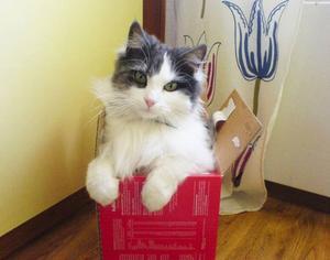 """emil nissesson är bäst.""""Här kommer en bild på min katt, Emil Nissesson. Han är bäst för han är ofta ganska busig."""" Hälsningar från Pelle Berglund, 9 år."""