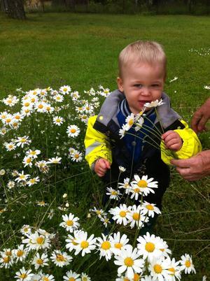 Barnbarnet Oliver bland blommorna. Foto Sussie Eriksson