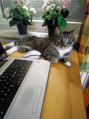 Randoris, bästa polare med mus vid datorn. Bild: Anna-Karin Sundberg