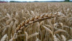 Att skydda sin jordbruksmark mot slamspridning borde vara en självklarhet.