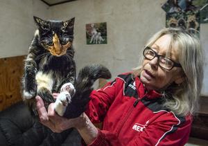 Christina Eriksson visar upp Sessan, hon är en av de tre stora kattungarna som kommer att få bo kvar hos paret i Östanskär