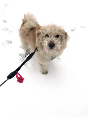 Om bilden: Detta är bild på min fina hund Major Pennycook (kallas vardagligen för Penny) när han var ute och lekte i vinterns första snö. Han är ca 2 år gammal och hittades sårig och ledsen på en gata i Portugal förra vintern. Vi har varit sambos sedan i maj och han är varken sårig eller ledsen längre. Foto: Hanna Blandon