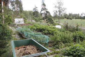 Växterna trivs i landet som enbart består av hästgödsel.