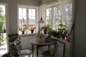 Det strömmar in ljus från de många fönstren.  Blommorna måste vattnas ofta.