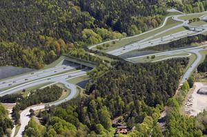 Ekodukten kommer att bli 60 meter bred och 90 meter lång. Illustration: Trafikverket