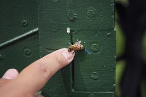 Bin är avgörande för vår matproduktion. Men bin och många andra insekter hotas av bland annat föroreningar.