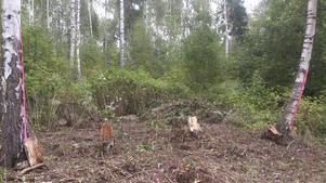 Luostarinen använder två rosa band för att visa avgränsningen mellan verket och resten av skogen.