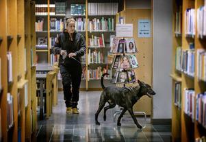 Biblioteket, toaletterna, elevskåpen - knarkhunden Max och hans förare Anna letade igenom stora delar av Alléskolan vid tisdagens narkotikasök i skolans lokaler.