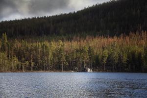 Vid foten av Gommorsberget guppar fotogömslet på vattnet. Kanske var det den något fuktigare marken som gjorde att skogen klarade sig precis här.
