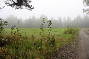Sara Mannqvist hävdar att kommunen motiverar att neka Elvina skolskjuts på grund av att Kvarnängevägen delvis kantas av åkerfält som detta. Hade det dock varit skog på båda sidor av vägen hade läget varit annorlunda, hävdar Sara Mannqvist.
