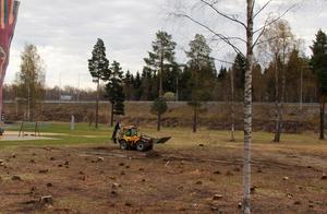 Nästan alla träd är borta och nu grävs stubbarna bort.