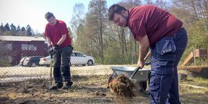 Casper Lind och Håkan Sigurdsson har börjat vända jord för att de ska kunna ha en fyra gånger större odlingslott detta år. Förra på året gjorde de ett mindre test med potatis och morötter.