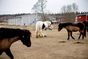 Härnösand hästsportarena.