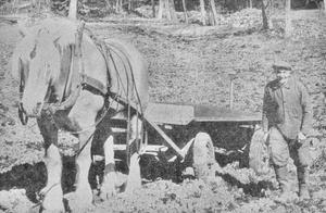 """I bildtexten från 1971 står: """"Det småländska småjordbruksriket bjuder på fina stämningsvärden när våren bryter in med all sin ljuvlighet. Hästen är inte lika rationell som traktorn, men medge att den ger en mer livad bild, sa Martin Seth nöjt på sin åker."""""""