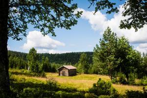 Brudskogens fäbod bjuder på vacker omgivning. Bild: Boel Ferm.