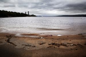 Här i Sundsvallsbukten ser nog de flesta ett större, omedelbart problem med de många tusen sönderrostande tunnor med kvicksilveravfall som ligger strösslade på havsbotten. Jämfört med bioremediation av fiberbankar borde väl detta vara både enklare att hämta upp och åtgärda vidare?, skriver debattförfattaren. Foto: Arkiv
