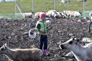 Eijra Jonsson, 6 år, med lasso i rengärdet.