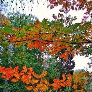 Den vackra hösten är här.Foto: Marga Wahlqvist