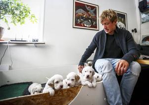 Isak Öhrström har att göra när han är hemma. Hos pappa tävlar nio settervalpar om uppmärksamheten, precis innan han själv ska köra nästa träningspass. Kommande vecka är det träningsläger i Prag som gäller.