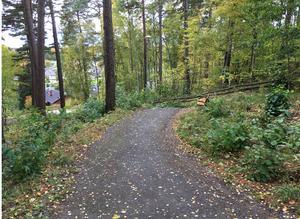 Grönskan är bland det medborgarna gillar mest med Bårsta och Blombacka och vill bevara, här gångvägen intill Högbergsparken.