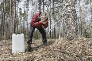Peter Mosten tar ett smakprov av saven. Björkarna som används ska vara minst 30 år. Under året åker han runt för att leta var det finns bra områden och tar kontakt med markägare.