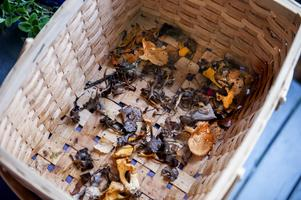 Under hösten vistas gärna Birgit i svampskogen.