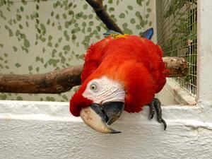 Papegojan Douglas spelade Pippis papegoja Rosalinda i filmerna om Pippi Långstrump. Arkivfoto: Frank Madsen/TT