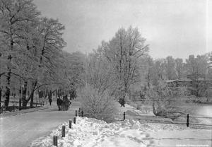 Häst med släde i Slottsparken, 1940-tal. Foto: Eric Sjöqvist, Örebro