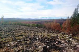 Vid en första anblick ser det ut som en höstdag i ett fjällandskap – men så uppenbaras sanningen: de orangebruna träden är barrskog som brunnit. Foto: Henrik Simsson
