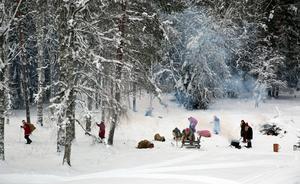 Tomars skog i Våmhus.