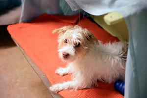 Lek och bus med andra hundar är en bra aktivitet som får hunden trött. Sigge leker dagligen med andra hundar.
