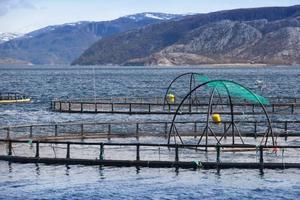 Arne Molin skriver att foderförbrukningen vid fiskodlingar bidrar till överfiskningen i världshaven.