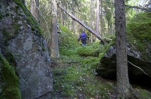 Delar av reservatet är rejält blockigt och andra  delar har mycket  löv.