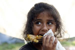 I ett flyktingläger i Bosnien stillar en flicka hungern med majs. Det fattiga Bosnien har fullt upp med att ordna vettiga bostadsförhållanden till vintern för de många flyktingar från Mellanöstern som hamnat där sedan EU stängt sina gränser. Foto: Amel Emric/AP Photo