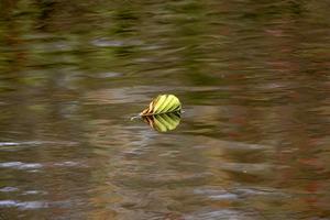 Jag var ut till Mekens område och gick mellan Höjen och Grindberga. Såg då detta löv som sakta dalade ner från träden och landade så mjukt på vattnet. Tur man hade kameran med sig. Foto: Robert Lindberg.