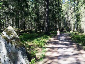 Lindesjön runt bjuder på varierande natur med både skogs- och ängsmark.