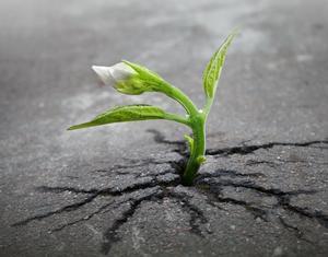 Begreppet tillväxt behöver omvärderas och mer handla om människors frihet att skapa goda levnadsvillkor än om förbrukning av planetens råvaror och maximera vinst, skriver insändaren. Foto: Pixabay.com.