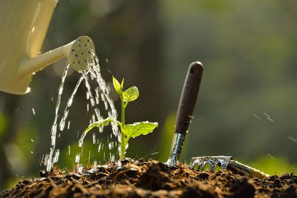 Risk för vattenbrist gör att många kommuner hänvisar till vattenkanna och regntunna om du ska vattna i trädgården. Men det finns flera knep för att få ut så mycket som möjligt av det lilla vatten som finns.