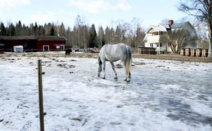 Vid den här hästhagen vid en gård i trakterna av Dagkarlsbo såg en boende i fredags en varg. För två veckor sedan hörde en annan boende vargen morra bakom ladugården.