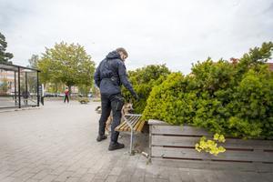 Hundförare sökte igenom buskage och planteringar i närheten av brottsplatsen.