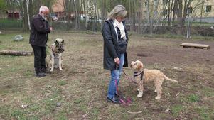 Den enda hundrastgården som finns i hela Bomhus ligger intill Bomhus centrum. Den är stor och fin – men det är långt för dem som inte bor alldeles i närheten.