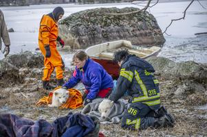 Här lindas hundarna in i filtar efter räddningsinsatsen. Foto: Niklas Hagman