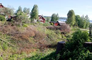 Det ska städas upp och planteras nytt i bäckravinen mellan Back- och Skolgatan i centrala Timrå.