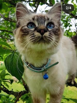 330) Detta är min katt Cleo, älskar att vara ute och har många friare efter sig. Hon är super gosig och tycker om att stå i centrum. En supermysig katt helt enkelt :) Foto: Sara Fredriksson