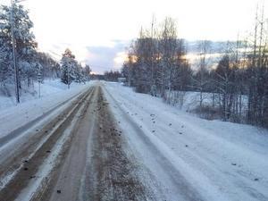 Mikael Lind såg massor av klumpar på vägen. Det visade sig vara hundratals döda fåglar – mitt på vägen.  Bild: Mikael Lind/Läsarbild