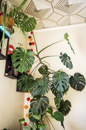 Martin och Eva älskar att omge sig med gröna växter.