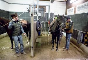Rue och Dixie sadlas av Göran och Henrik. Amerikanska quarterhästar är lugna till sinnet, men ska kunna reagera explosivt när det behövs.