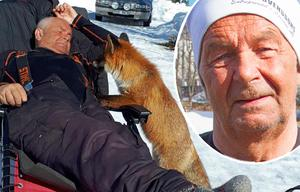 Sedan i februari har Ove Larsson haft sällskap av en tam räv, i fritidshuset i Örnåsen, två mil sydväst om Kårböle.