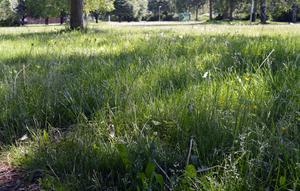 Insändarskribenten tycker att kommunen kan söka bidrag för att ha råd att klippa grönområdena. Foto: arkiv